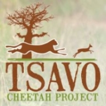 tsavo chetah project