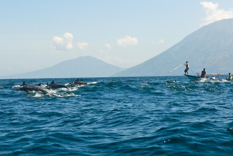 caccia ai delfini in Idonesia