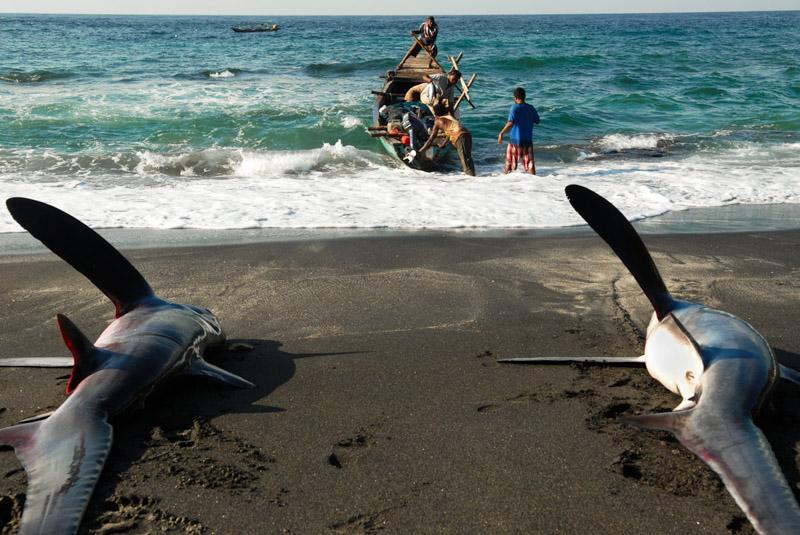 pesca a suqali e delfini a Lembata