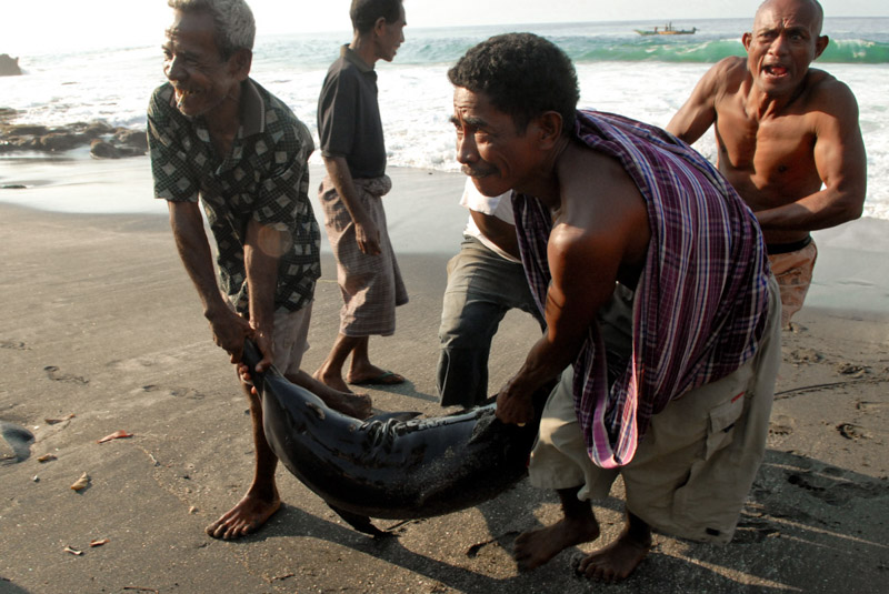 Pescatori di delfini a Lamalera